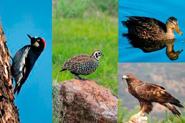 Unas 22 especies endémicas de  Tlaxcala en riesgo de extinción