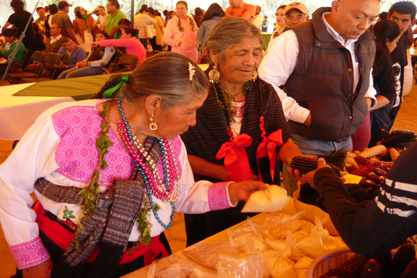 Grupos indígenas de la región de San Felipe Cuauhtenco mostraron la variedad de maíz que producen e intercambiaron semillas para extender la producción nativa de la región. / Armando PEDROZA
