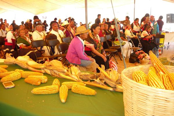 San Felipe Cuauhtenco fue sede de la Primera Feria de la Biodiversidad Indígena, que se desarrolló para promover el cultivo de maíz nativo de la región. / Armando PEDROZA
