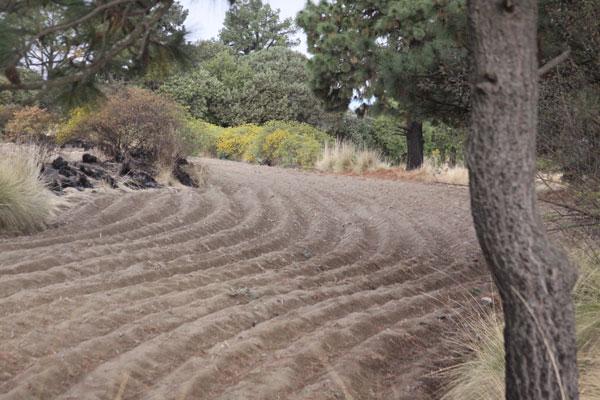 Miles de hectáreas sembradas de variedades de semilla de maíz criollo en zonas altas de Tlaxcala. / Tomás BAÑOS