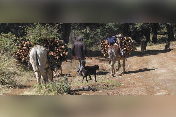Tala incontrolada y crecimiento urbano devasta 70% de la Malinche
