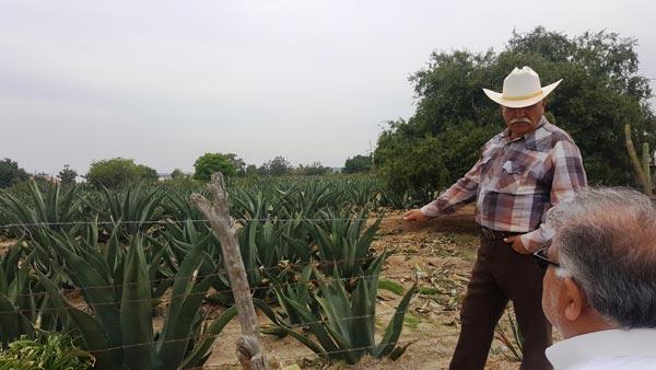 En la comunidad de Xaltitla se puede encontrar a José Juan Aragón Guerrero, uno de los grandes productores de destilado de pulque en Tlaxcala. /Leonel TLALMIS