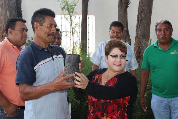 Reforestan en comunidades  dos mil plantas de árboles en Ixtacuixtla