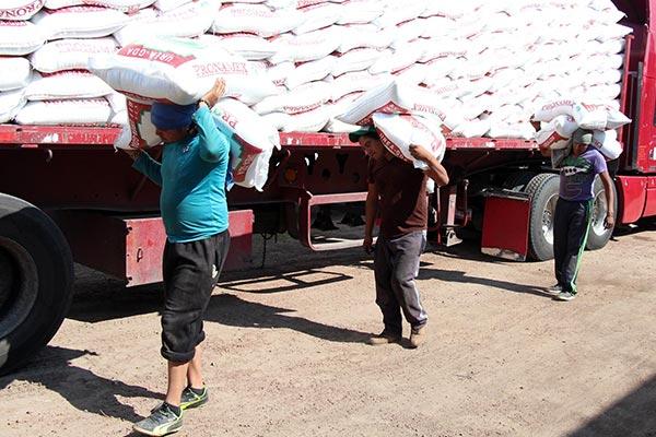 A través del Programa de Apoyo e Impulso al Sector Agrícola, desde marzo a la fecha, se han distribuido ocho mil 626 toneladas de fertilizante químico. / EL SOL DE TLAXCALA