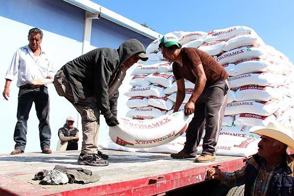 Entrega Sefoa fertilizante y semilla para actual ciclo agrícola