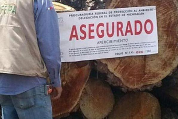 Asegura Profepa 11.7 metros cúbicos de madera en rollo