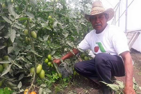 A tres semanas de que productores de Tlaxco inicien la producción de jitomate en cubiertas. /Tomás BAÑOS