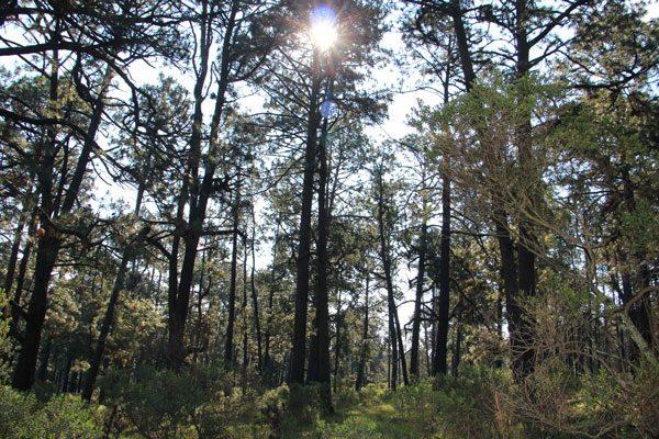 Vigila CGE medidas de conservación al visitar bosque de luciérnagas