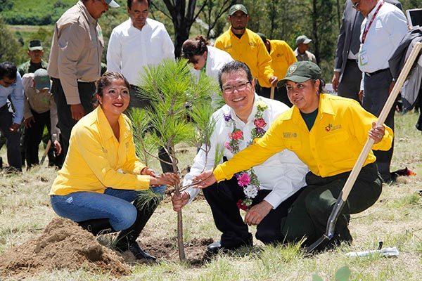 Inician la reforestación de las zonas de patrimonio cultural