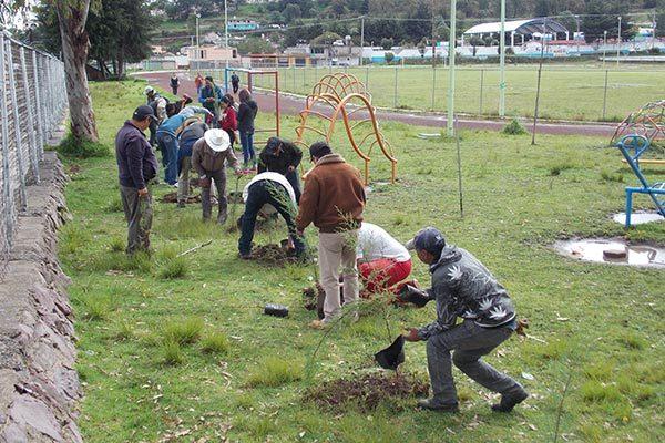 Participan empleados municipales de Nanacamilpa en reforestación de áreas verdes