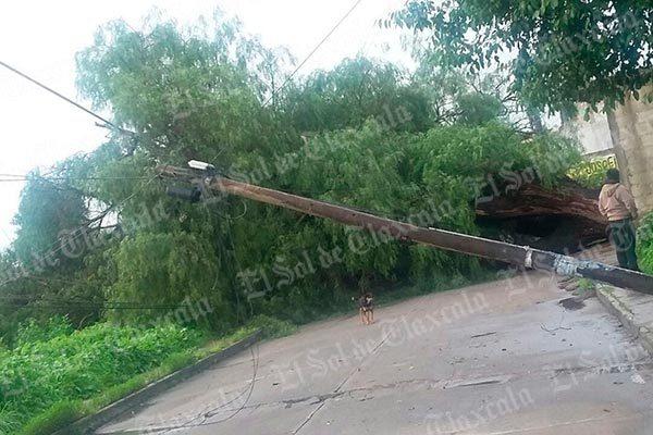 Cae árbol por reblandecimiento de tierra y bloquea carretera en Ixtacuixtla