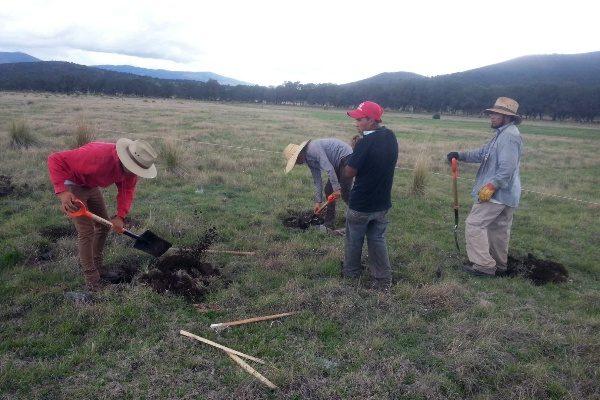 Siembra Coordinación General de Ecología seis mil árboles en tres áreas forestales