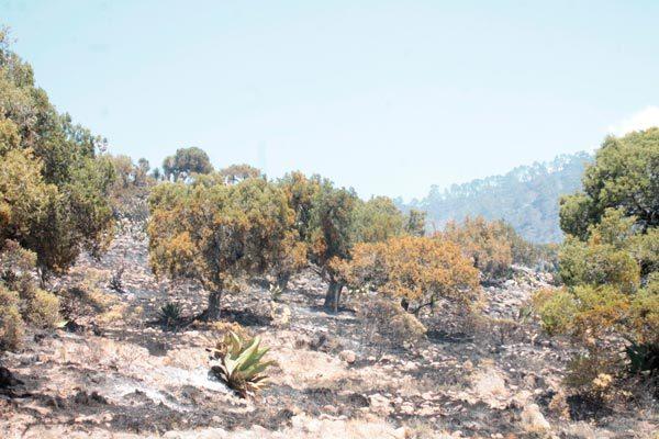 Reforestarán 50 hectáreas de bosques quemados en Altzayanca