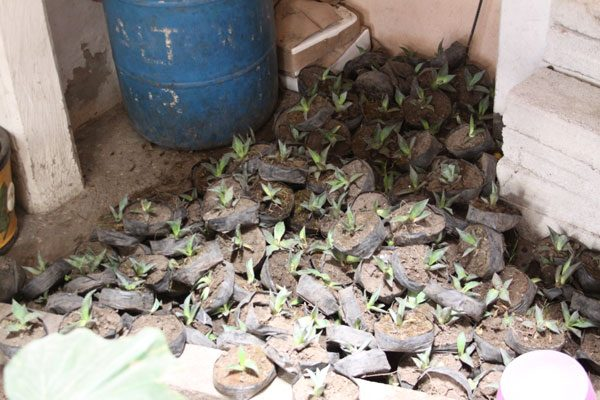 En el abandono, plantas de maguey en Xaltocan
