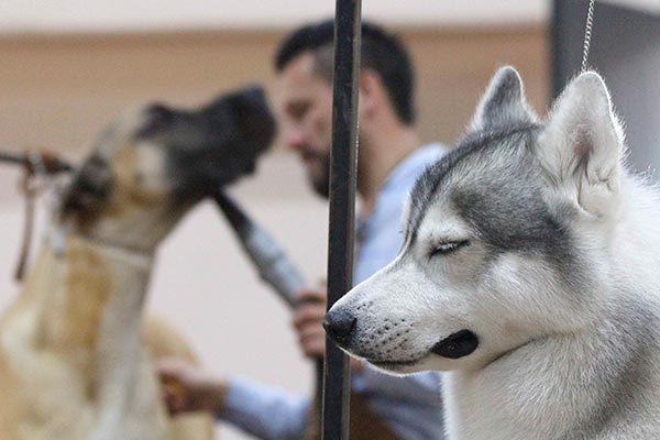 Realiza Sesa campaña de esterilización de perros y gatos