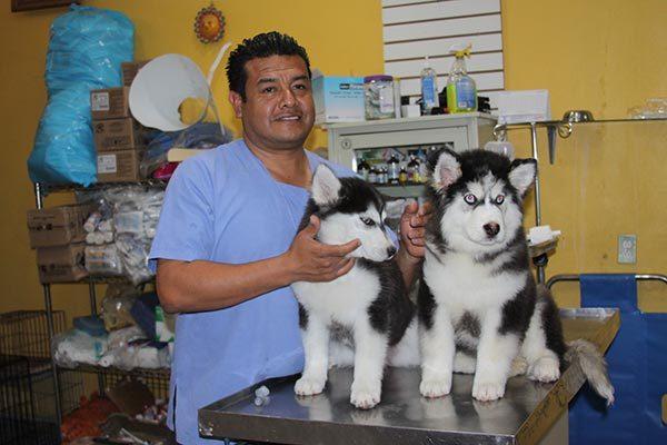 En Tlaxcala hay unos mil 350 médicos veterinarios, pero solo ejerce un 35 %