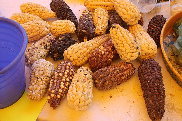 """Por lujo, preservan en Ixtenco el """"maíz ajo"""""""