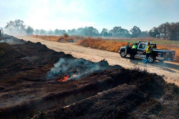 Incendios de arbustos benefician a la regeneración de suelos