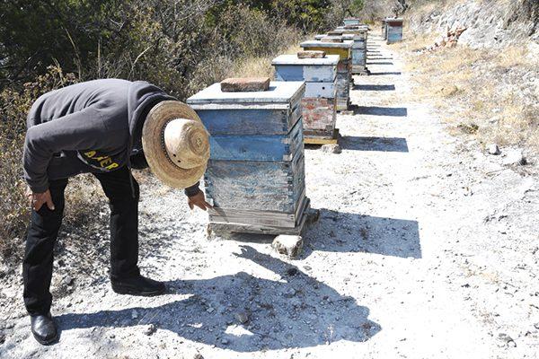 Sin afectaciones la apicultura por frío
