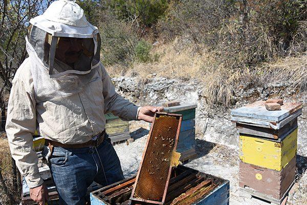 Piden apicultores ser tomados en cuenta en ley