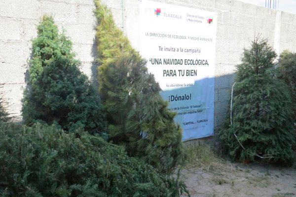 Capta ayuntamiento capitalino 150 árboles navideños en campaña de reciclaje