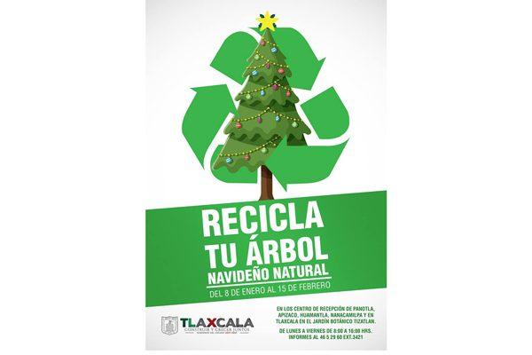 Abre CGE centros de acopio de árboles naturales de navidad