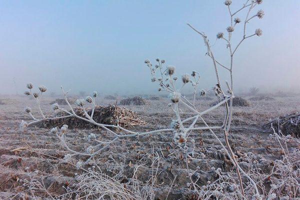 Helada de ayer, segunda más severa del invierno