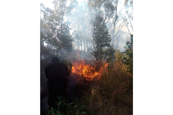 Dos incendios en la Malinche  consumen cuatro hectáreas