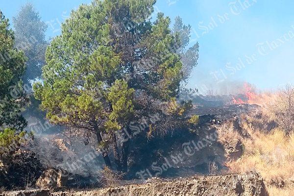 Incendios registrados en arbustos benefician a la regeneración de suelos