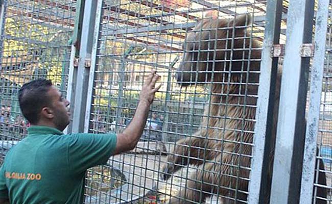 Oso arranca la mano a un niño que le daba de comer en un zoológico