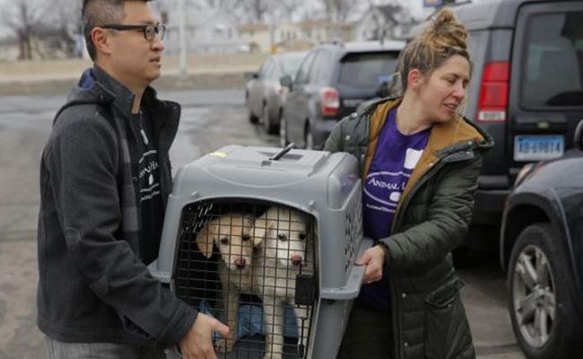Rescatan a 46 perros que iban a ser comidos en Corea del Sur