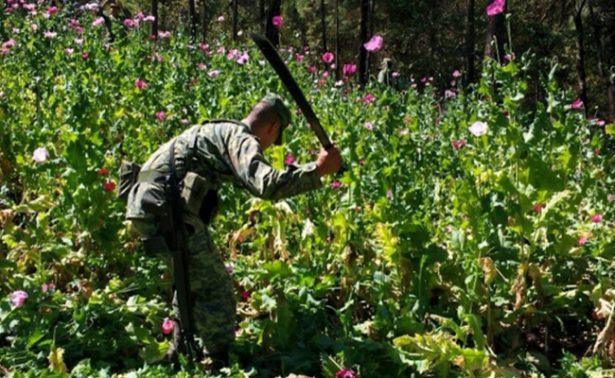 Estados Unidos ofrece financiar lucha de México contra amapola