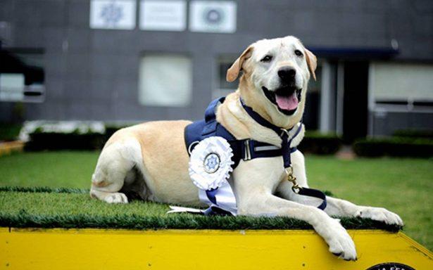 """Conoce a """"René"""", el oficial canino que se jubiló de la Policía Federal"""