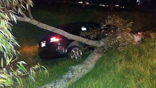 Se impacta contra árbol en Metepec