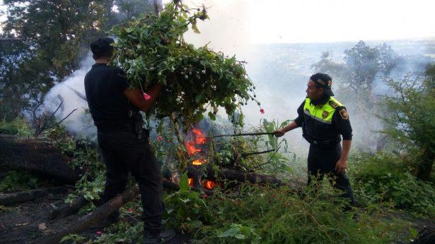 Destruyen tres sembradíos de amapola en Ocuilan
