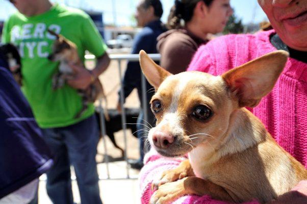 Avances en cuidado y adopción de perros: Fundación Amigos Peludos