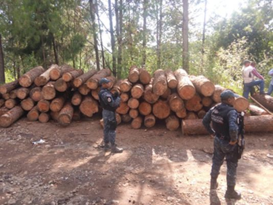 Asegura presunta madera ilegal en Temascaltepec