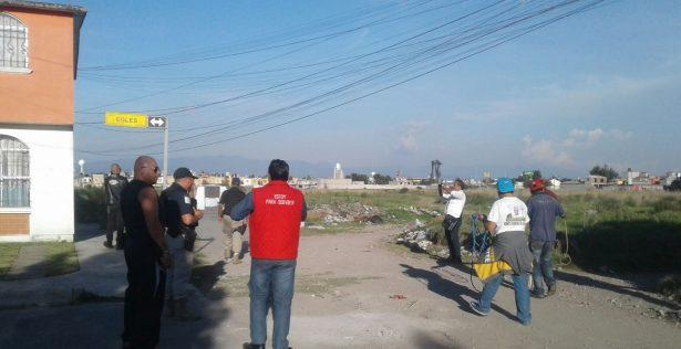 Aplican operativo para capturar perros callejeros en Toluca