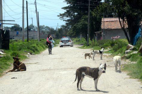 Frenan ultimátum para continuar capturando perros en San Mateo Otzacatipan