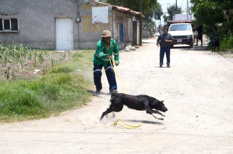 Definen esta semana situación de 41 perros retirados de las calles