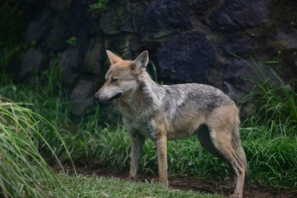 Alrededor de la mitad de los animales que habitan en Zacango son rescatados