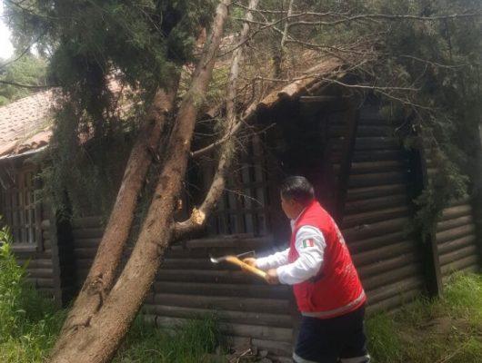 Cae árbol en instalaciones de policía montada
