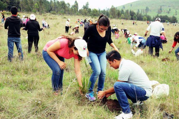 Alrededor de 40 mil árboles han sido plantados en el Parque Sierra Morelos