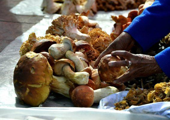 """[Galería] """"Hongos de agua"""", una tradición que no se pierde en Ocoyoacac"""