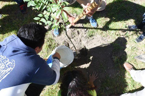 Advierten urgencia de cuidar áreas verdes