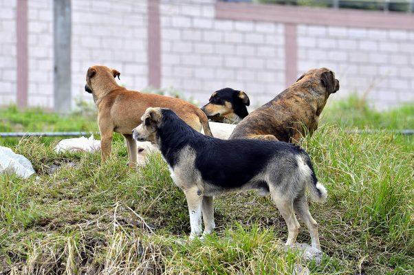 Importante vacunación y desparasitación de perros y gatos: médico veterinaria