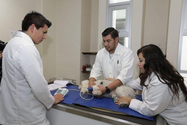 Atiende hospital veterinario de la UAEM de 20 a 25 consultas diarias