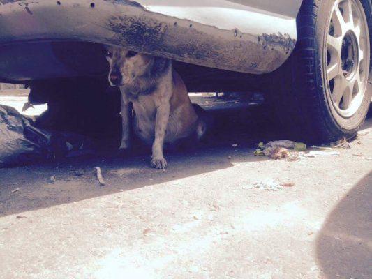 Madre e hija rescatan perros en situación de calle y les buscan hogar