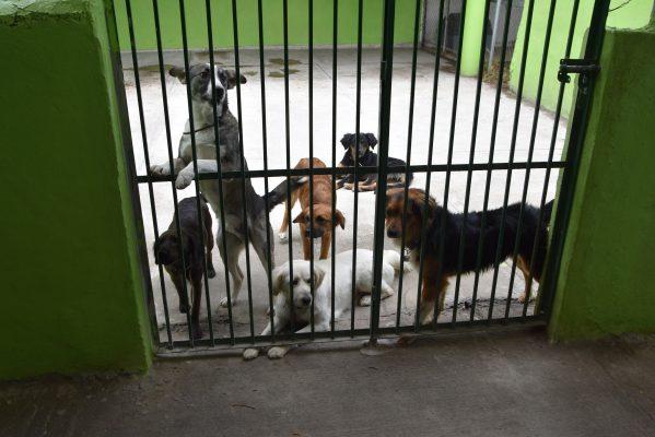 Llaman a fomentar adopción de perros y gatos