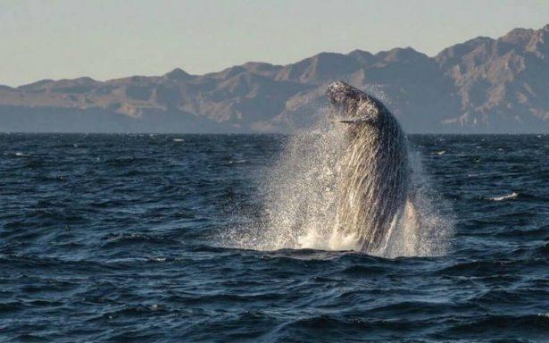 Peña Nieto llama al mundo a dar batalla a la protección de los océanos